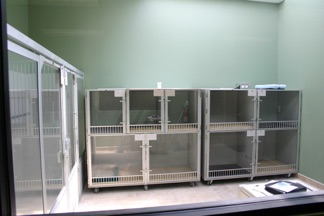 Hospitalized Patient Ward  Cages have